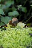 Champignons en Savernake Forest Wiltshire England - le Royaume-Uni image libre de droits