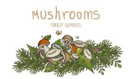 Champignons et éléments de forêt Photo stock