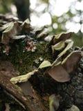 Champignons et champignon s'élevant sur un membre d'arbre tombé Photo stock