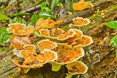Champignons et coquille jaunes Image stock