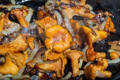 Champignons et oignon frits Images stock