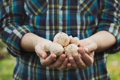 Champignons frais Image libre de droits
