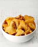 Champignons frais de chanterelle Photo stock