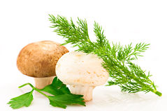 Champignons, green parsley and dill Royalty Free Stock Photography