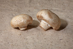 Champignons i. N a  small basket on a table Royalty Free Stock Photography