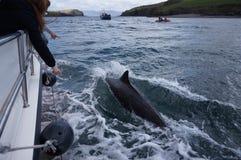Champignons le dauphin photos libres de droits