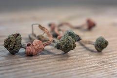 Champignons magiques non comestibles secs photo libre de droits