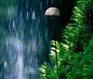 Champignons minuscules de champignons et herbe verte Photo libre de droits