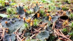 Champignons moulus Photographie stock