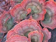 Champignons multicolores Photo libre de droits