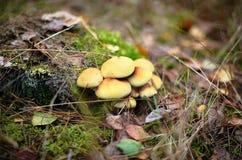 Champignons - mycélium Photo libre de droits