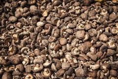 Champignons organiques Photos stock