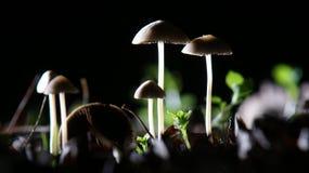 Champignons par nuit Image stock