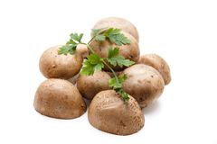 Champignons with parsley Royalty Free Stock Photography