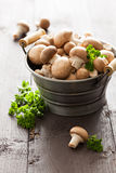 Champignons. With parsley in a bucket Stock Photography