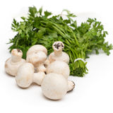 Champignons and parsley Royalty Free Stock Images