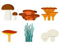 Champignons pour cru végétal organique comestible et fongueux d'automne sain végétarien de nourriture de cuisinier et de repas to illustration de vecteur