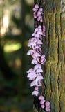 Champignons pourpres sur un arbre Photos stock