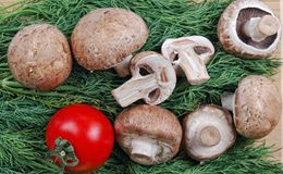 Champignons and red tomato Royalty Free Stock Image