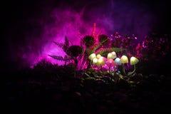 Champignons rougeoyants d'imagination en plan rapproché foncé de forêt de mystère Le beau macro tir du champignon magique ou les  image stock