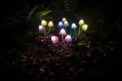 Champignons rougeoyants d'imagination en plan rapproché foncé de forêt de mystère Le beau macro tir du champignon magique ou les  photo stock
