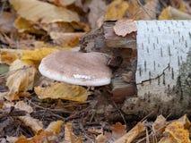 Champignons s'élevant aux arbres dans la forêt de chute d'automne image stock