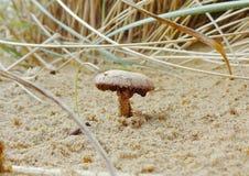 Champignons s'élevant dans le sable images stock