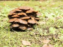Champignons sauvages Image libre de droits