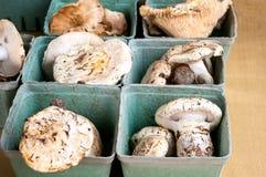 Champignons sauvages Photo stock