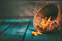 Champignons sauvages crus de chanterelles dans un panier Photo stock