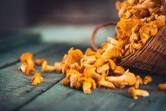 Champignons sauvages crus de chanterelles dans un panier Image libre de droits