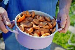 Champignons sauvages dans la casserole Image libre de droits