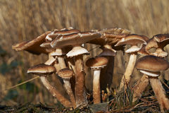 Champignons sauvages dans la forêt un jour ensoleillé d'automne Image libre de droits