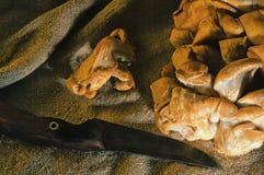 Champignons sauvages se trouvant sur la table dans le sac Photographie stock libre de droits