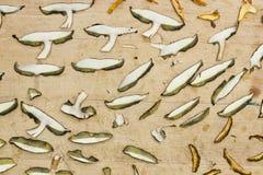 Champignons secs Images libres de droits