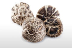 Champignons secs Images stock