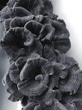 Champignons secs Image libre de droits