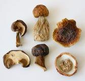 Champignons secs. Images libres de droits