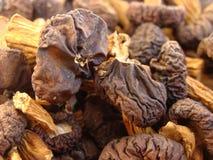 Champignons secs Photographie stock