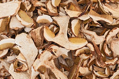 Champignons secs de porcini image stock