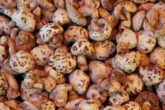 Champignons secs, marché chinois Photographie stock libre de droits