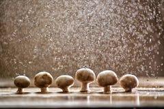 Champignons sous la pluie, beaux-arts de nourriture Image libre de droits
