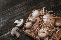 Champignons on a substrate. On a dark background Stock Photos