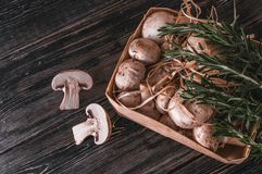 Champignons on a substrate. On a dark background Stock Photography