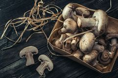 Champignons on a substrate. On a dark background Stock Image