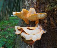 Champignons sur l'arbre Photo stock