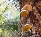 Champignons sur l'arbre Image libre de droits