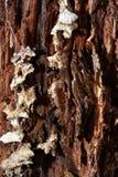 Champignons sur l'arbre de décomposition images stock