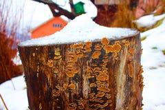 Champignons sur la ruche neigeuse photo stock