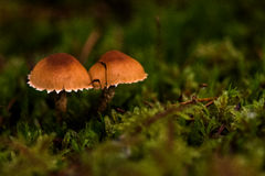 Champignons sur le plancher de forêt Image stock